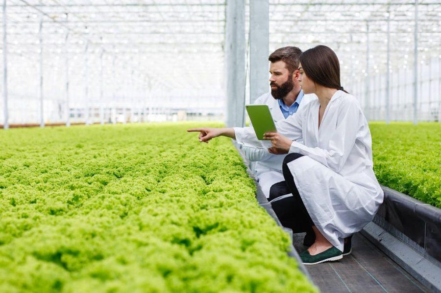 Agrovoltaica aprovecha horas de actividad
