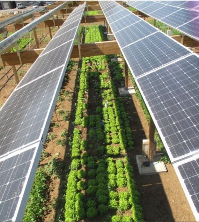 imagen aérea de una instalación solar agrovoltaica
